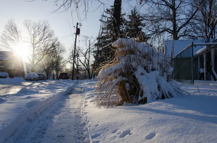 Snow and Ornamental Grass