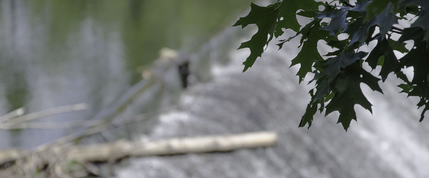 A leafy branch in focus against the backdrop of a mill dam