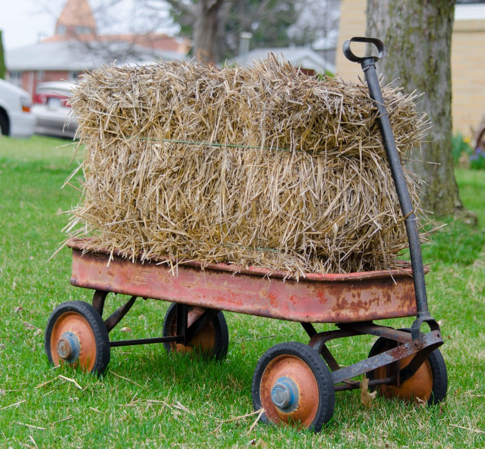 An old radio flyer put into service as a lawn decoration