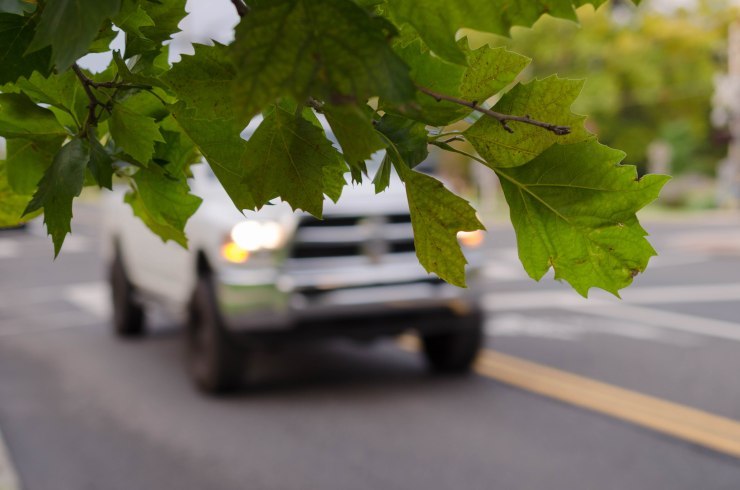 A tree branch in focus, against the backdrop of a moving pick-up truck.