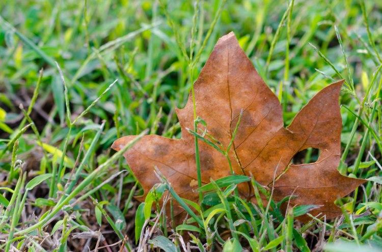 Leaf macro image taken with a Nikon DSLR