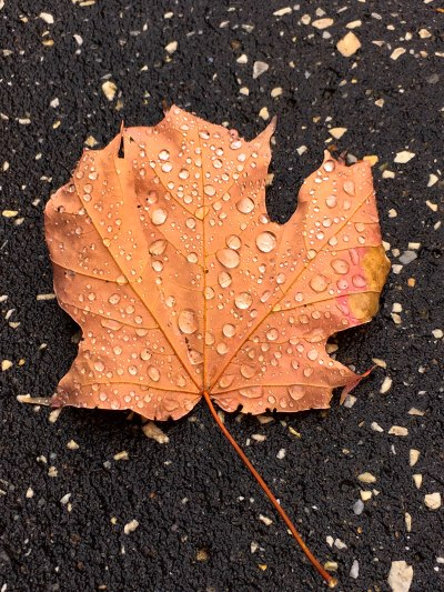 A lone leaf, covered in water droplets