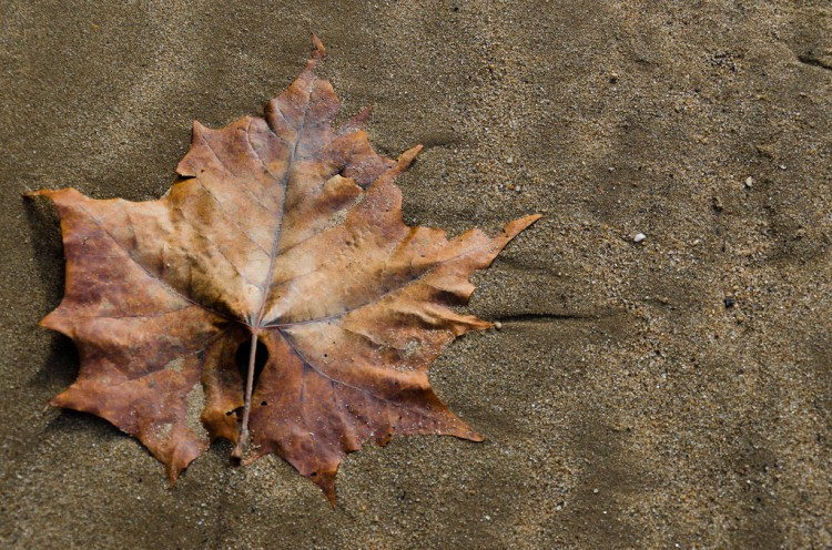 A single leaf, fallen along the banks of the Delaware