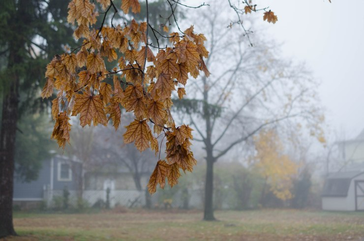 A leafy branch on a foggy morning