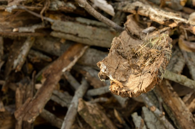 A single piece of bark desperate reaches out from a scrap pile