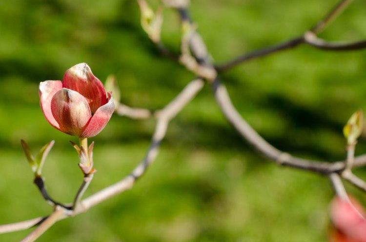 Lovely Spring Blossom