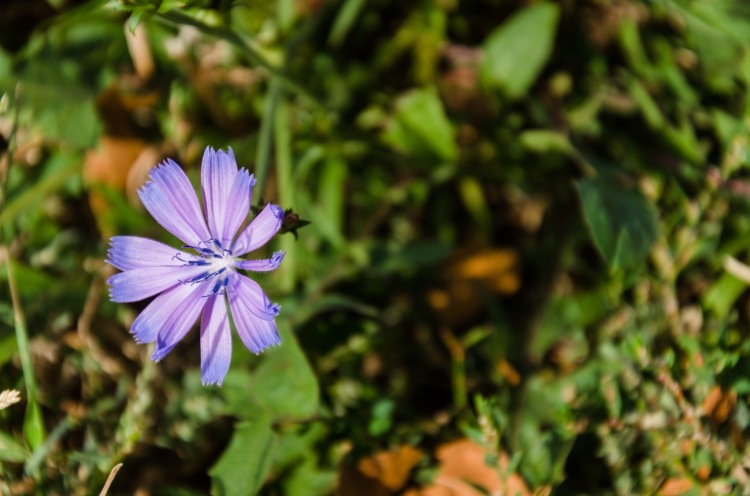 Small Lavendar flower in a field of green