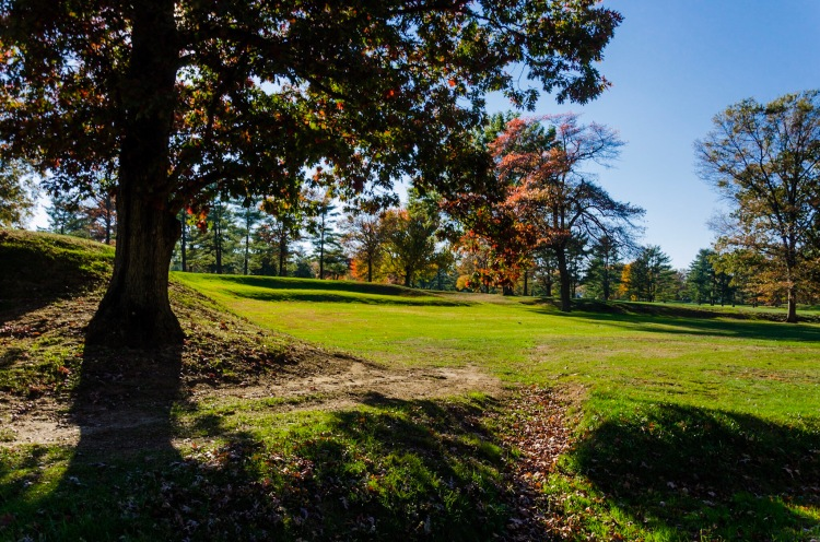 Looking from the late afternoon shadows, toward the light of an open golf course fairway.