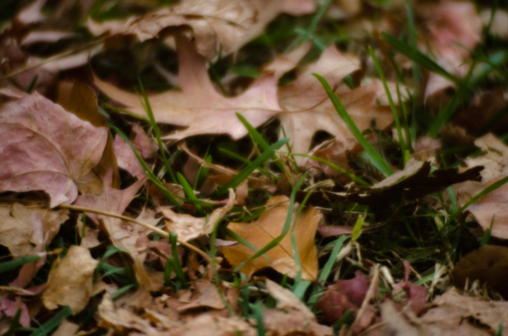 A macro shot of fallen leaves