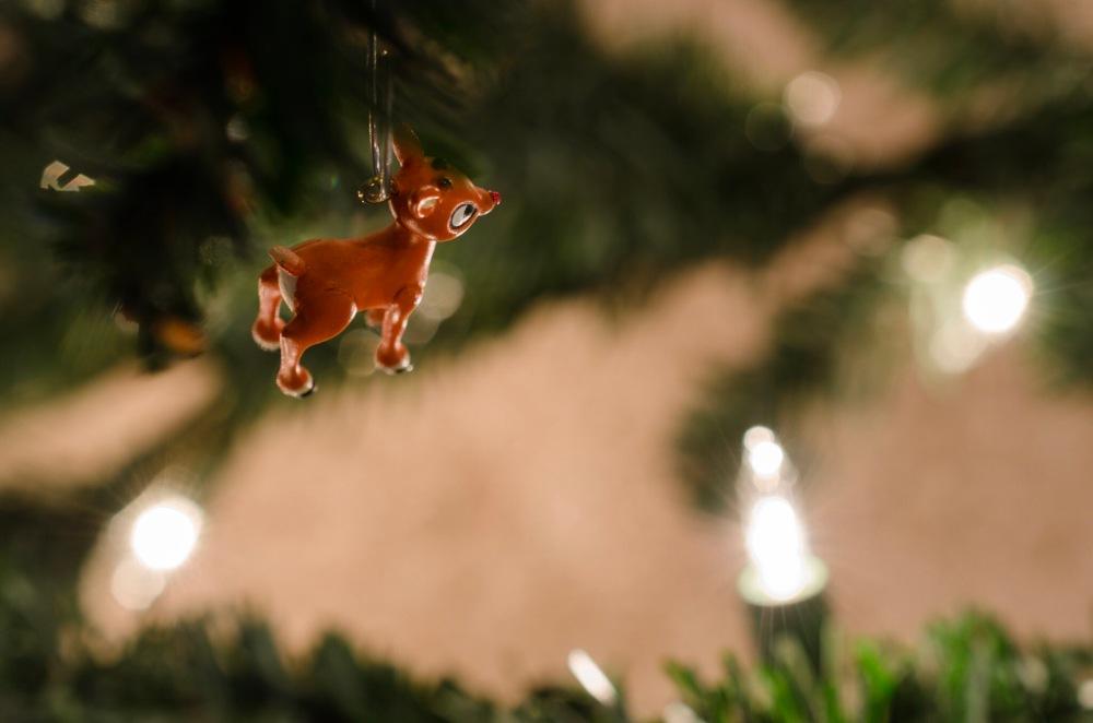 A tiny Rudolph Christmas tree ornament.