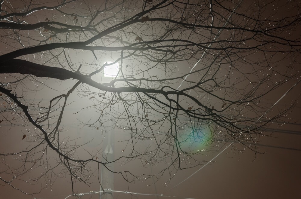Back lit tree branches in the thick grey fog