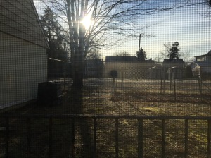 The morning sun in my backyard