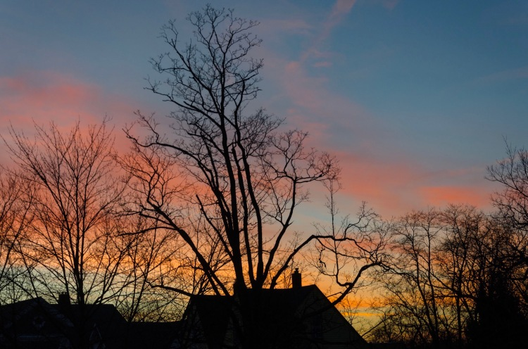 Sunset with silhouetted trees in the foreground.