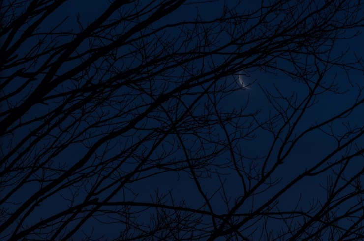 A sliver of fog-covered Crescent Moon, peeking out from some trees