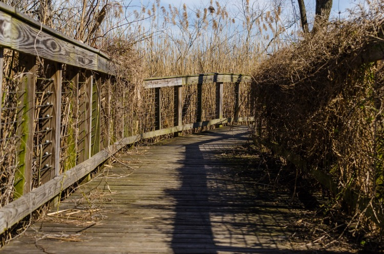 Boardwalk deep in Palmyra Nature Cove Park