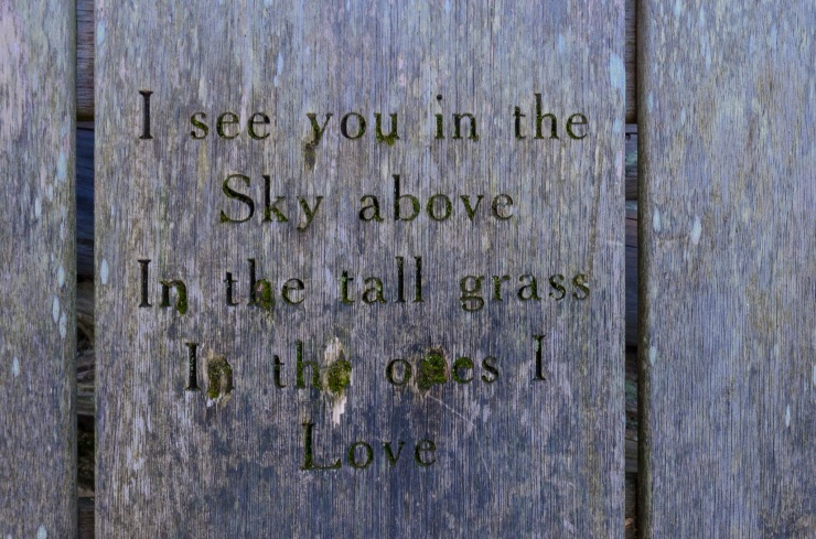 I see you in the Sky above - In the tall grass - In the ones I love