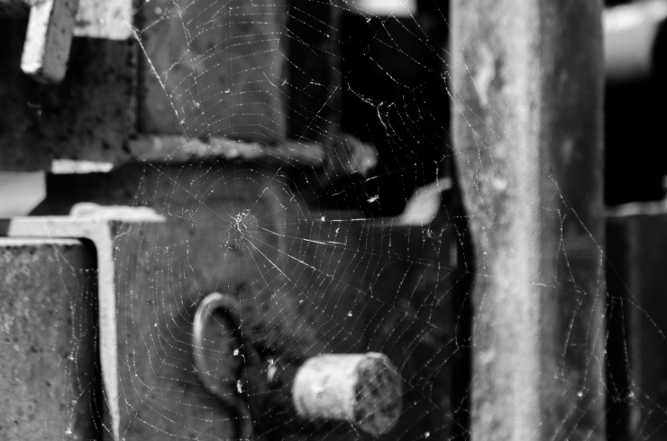 Spider web, with the previous night's rain still clinging to the threads