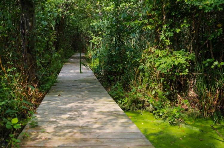 Boardwalk in Taylor Wildlife Preserve