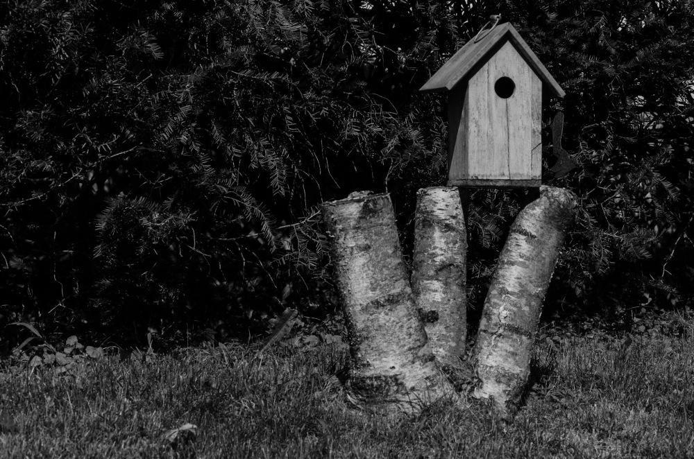 A Birdhouse on a triple-trunk tree stump.