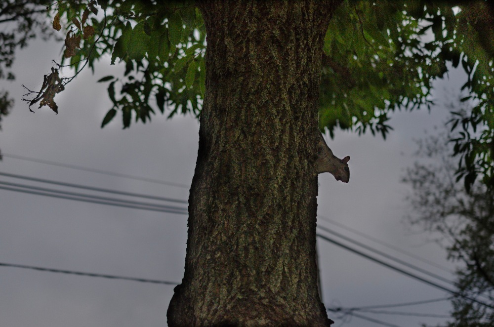 A squirrel perched in a tree.