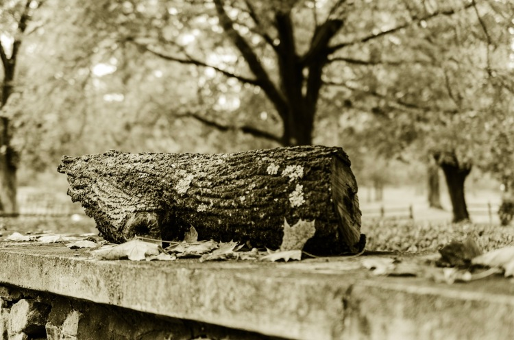 A log on top of a wall.