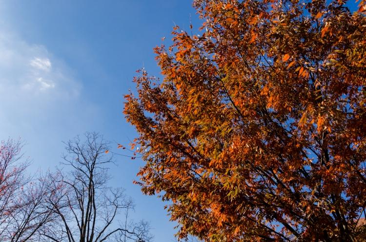 Fall leaves, developed in Lightroom