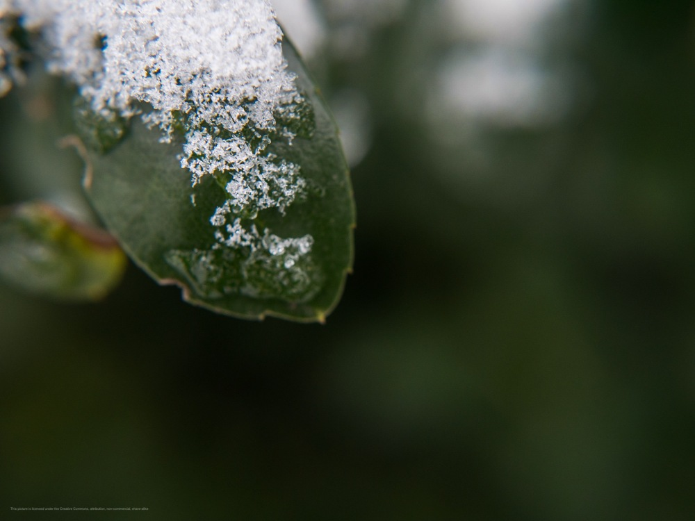 Macro of icy slush on a leaf