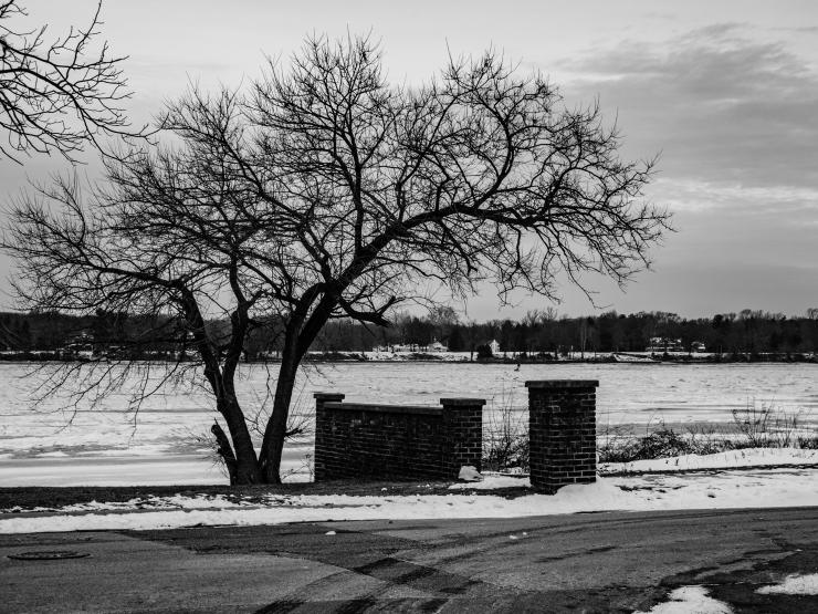 A lonely tree overlooks a frozen Delaware.