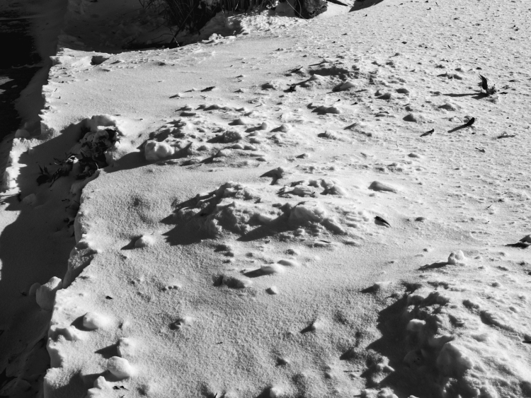 Cold Temperatures and snow make for a sand-like blanket on the winter ground.