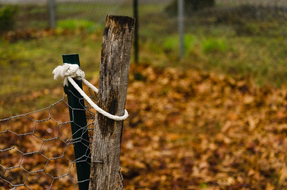 Garden fence gate