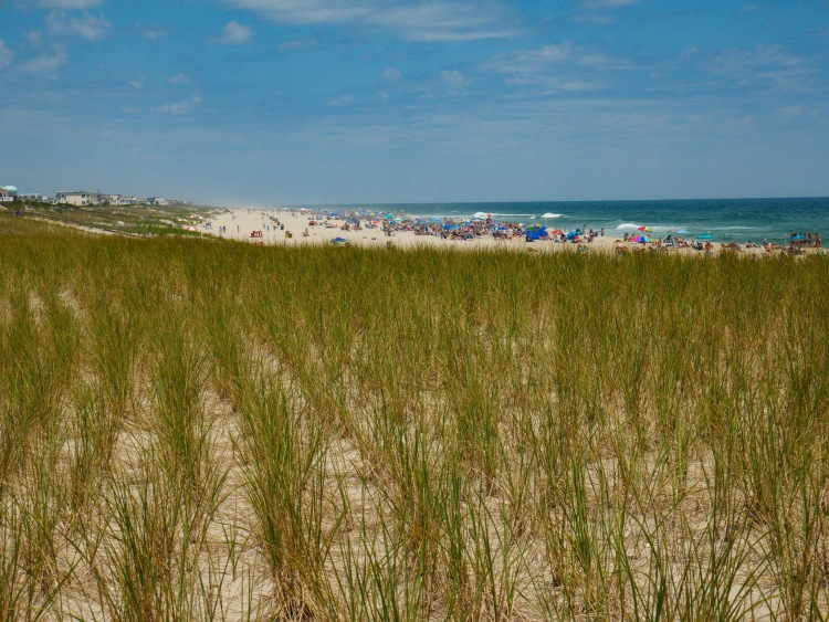 Beach umbrellas as far as the eye can see
