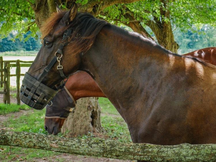A Horse At Pennsbury Manor