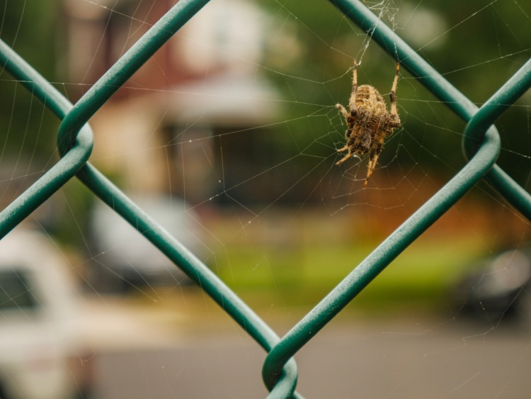 A spider in its web.