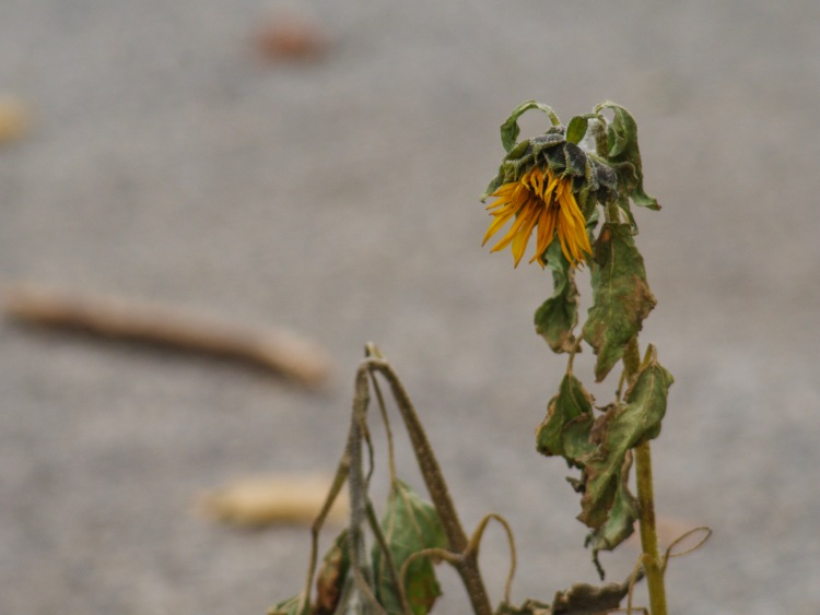 One last flower.