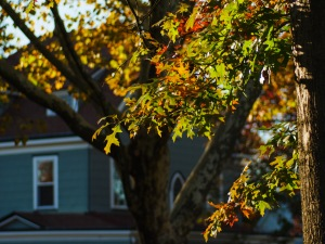 Fall sunlight filtered by gold & orange leaves.