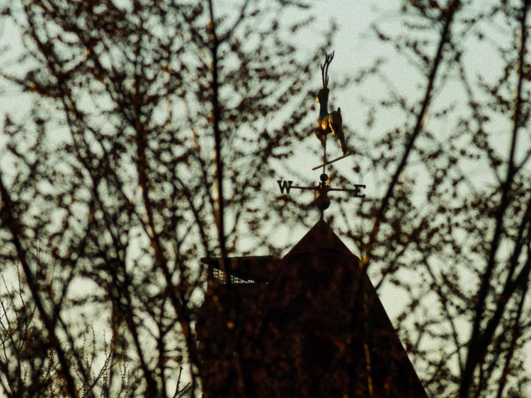 A weather vane as Golden Hour hits...
