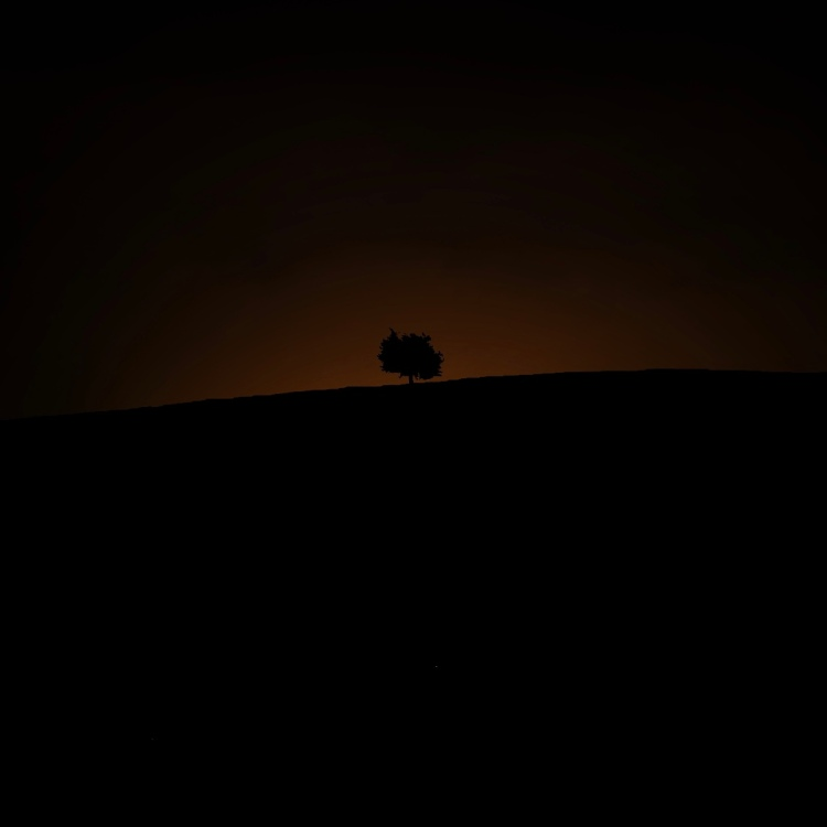 The silhouette of a tree, with the hint of sunlight coming up over the horizon.